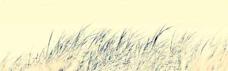 Close up of dune grass at the beach
