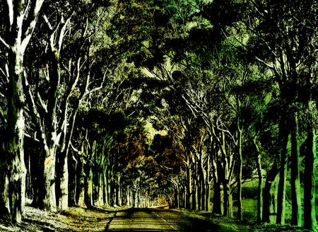 Landscape with long Eucalyptus tree Avenue Archivio Fotografico - 104264921