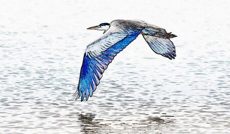 A gray Heron flying over the mountain river
