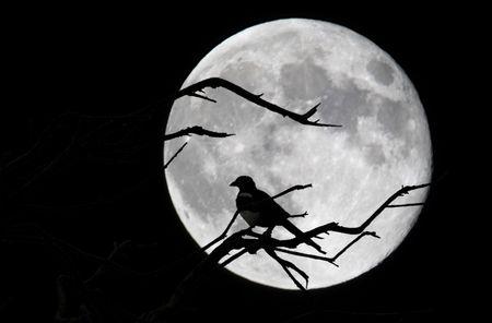 asturias: Bird and moon in Asturias, Spain Stock Photo