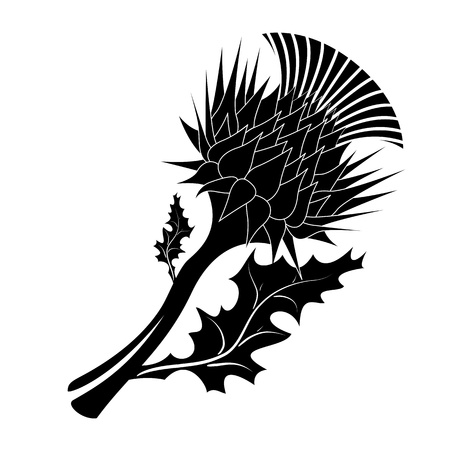Decorative vector thistle on white background