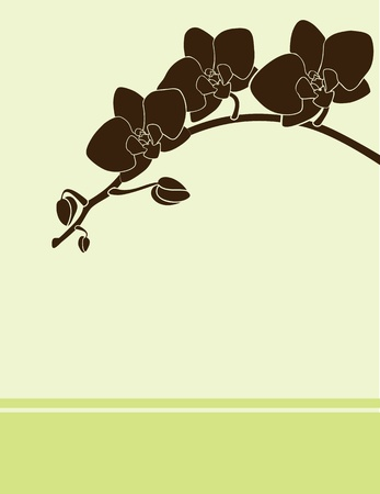 green postcard with brown orchid