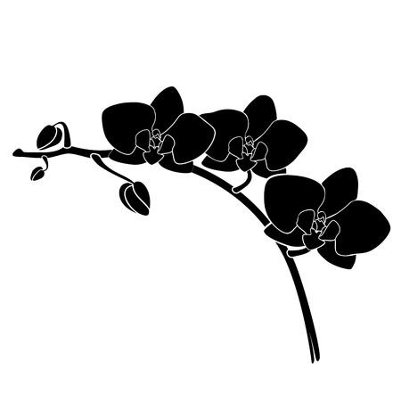 orchidee silhouet Vector Illustratie