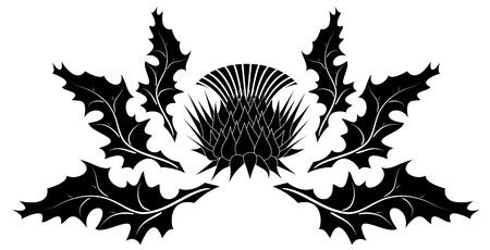 ostrożeń: Thistle ornament na biaÅ'ym tle Ilustracja