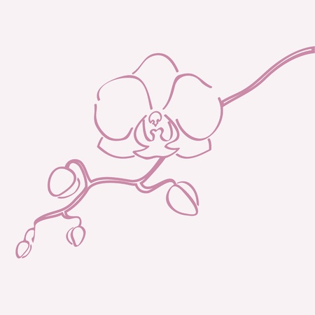 Orchid flower vector silhouette