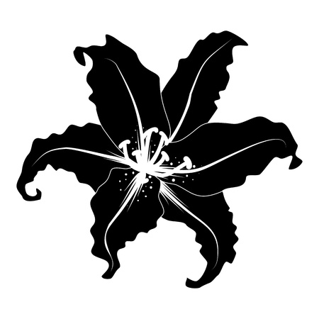 Decorative lily silhouette in black and white color Vector