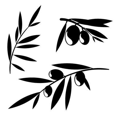 olive leaves: Graphic silhouettes of olive tree branches