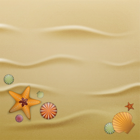 tranquil scene: Sea urchin shells, starfish and scallop shells on sand. Illustration contains gradient mesh Illustration