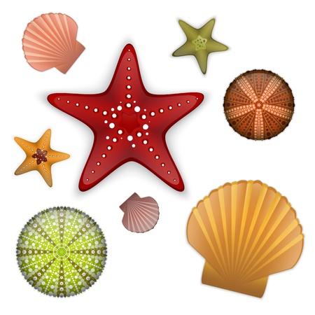 Conjunto Vida de mar, estrellas de mar, concha de vieira, erizo de mar.