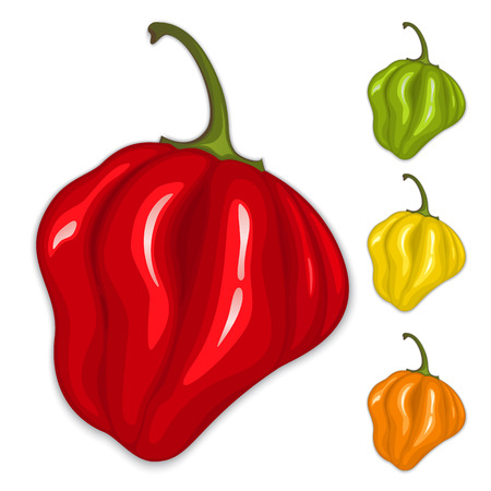 Red, yellow, green and orange hot habanero peppers. Vector