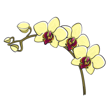 Hand drawn orchid phalaenopsis branch, sketch style Vector