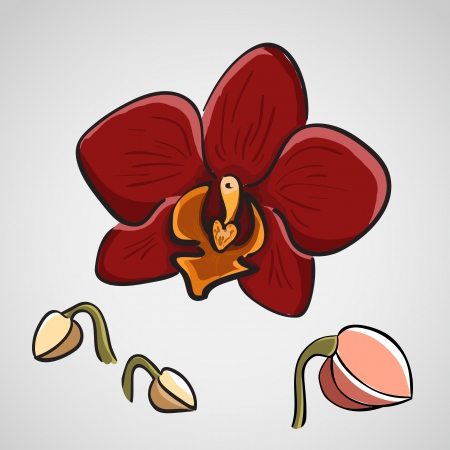 Hand drawn red orchid phalaenopsis, sketch style Vector