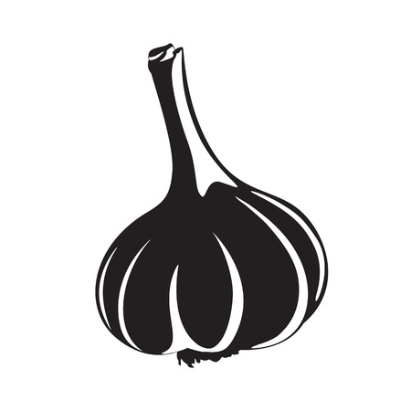Graphic garlic silhouette, black and white Illustration