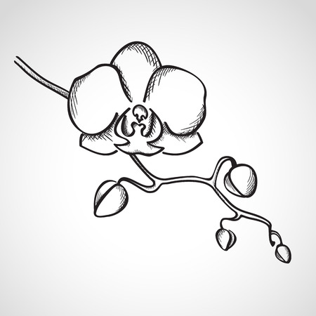orchid branch: Sketch orchid branch, hand drawn, ink style