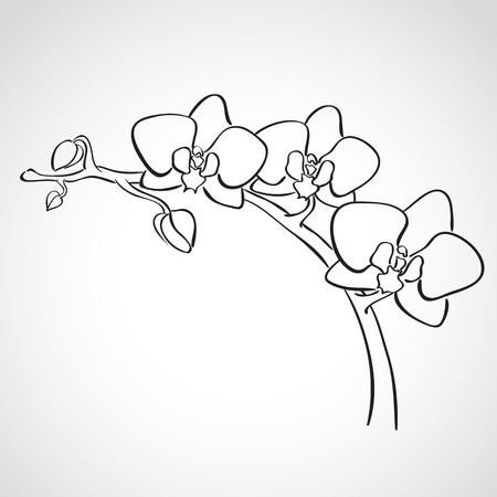 black outline: Sketch orchid branch, hand drawn, ink style