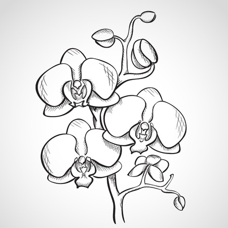 Sketch orchid branch, hand drawn, ink style Vector