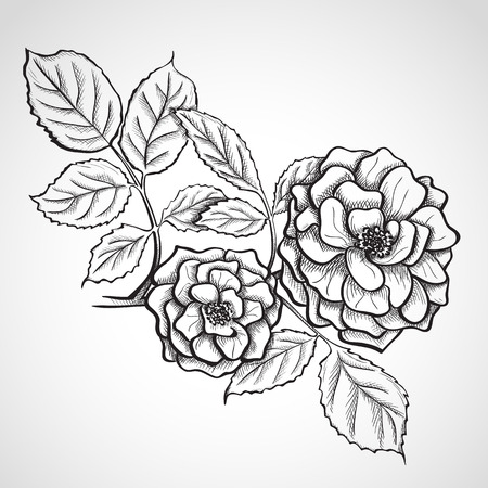 rosaceae: Sketch rose branch, hand drawn, ink style Illustration