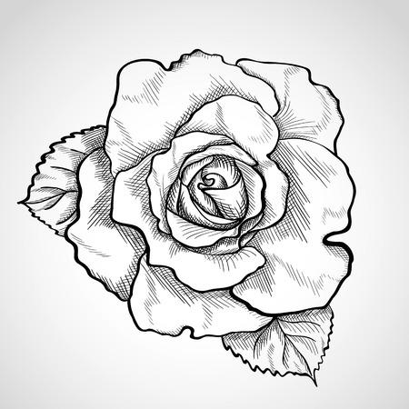 rose blanche: Croquis rose branche, tir� par la main, le style d'encre Illustration