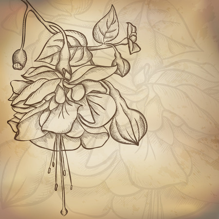 Sketch  Fuchsia background, hand drawn, ink style Vector