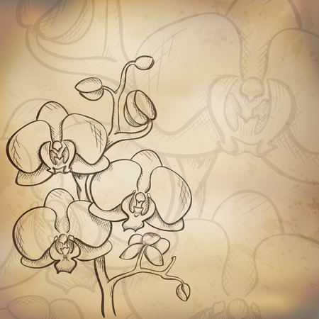 Sketch  orchid background, hand drawn, ink style Vector