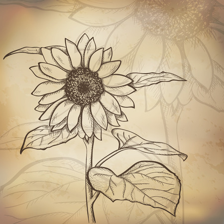 Sketch  sunflower background, hand drawn, ink style Vector