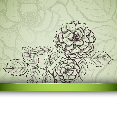 rosaceae: Sketch  rose background, hand drawn, ink style