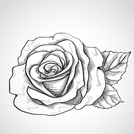 Sketch rose, hand drawn, ink style Vector