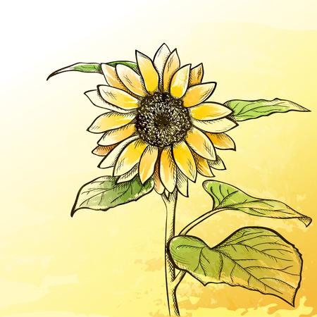 Sketch sunflower background, hand drawn flower Illustration