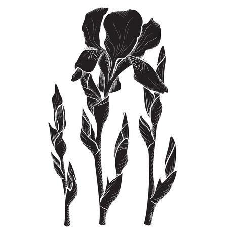 Sketch iris flowers, hand drawn, ink style Vector