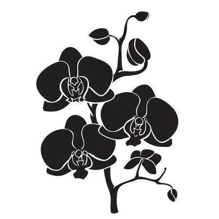 Silhouette orchid branch Vector