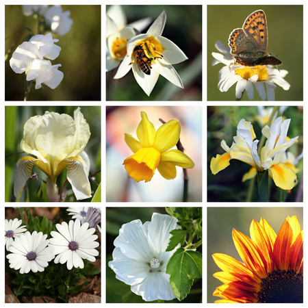 Collage with beautiful white and yellow spring and summer flowers photo