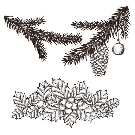 ilex: Ilex aquifolium decor, also known Christmas holly or European holly and christmas tree branches