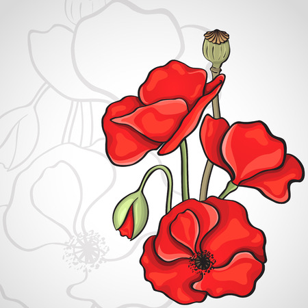 poppy seeds: Papaver rhoeas also known as corn poppy, corn rose, field poppy, Flanders poppy drawing Illustration