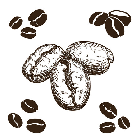 beans: Silhouette and hand drawn coffee beans.