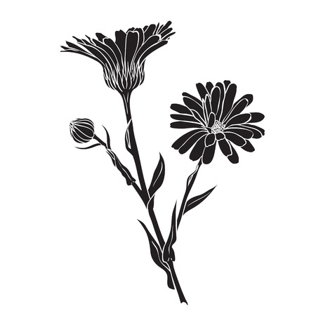 officinalis: Hand drawn flowers - Calendula officinalis or pot marigold silhouette