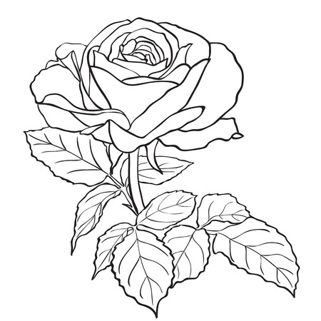 Sketch rose branch, hand drawn, ink style Illustration