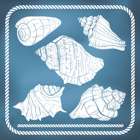 rope border: Hand drawn seashell silhouettes and rope border