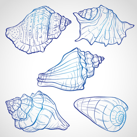 seashell: Hand drawn seashells, ink style vector illustration