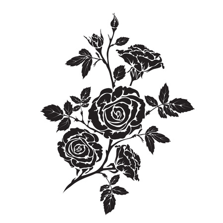 rosaceae: Silhouette rose branch with opened flowers and buds Illustration