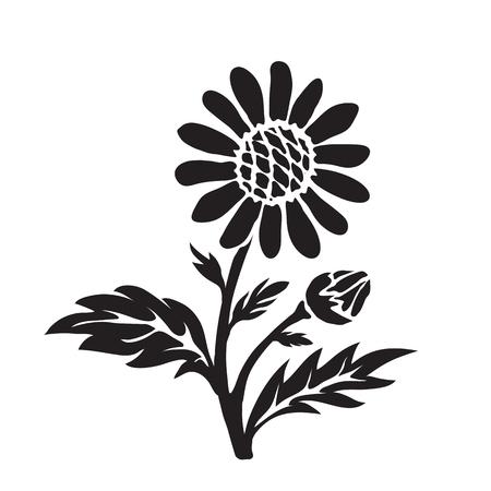 shasta daisy: Leucanthemum (oxeye daisy) silhouette