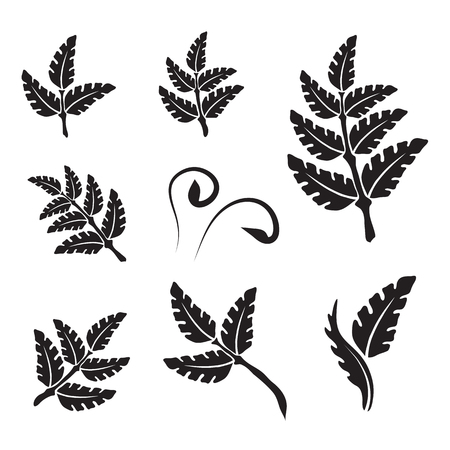 different shapes: Silhouette leaves in different shapes, palm leaves