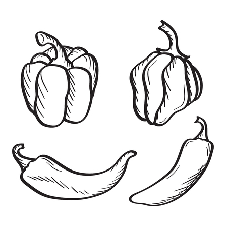 Artistic hand drawn sketches of hot chili, habanero and jalapeno peppers and paprika. Illustration