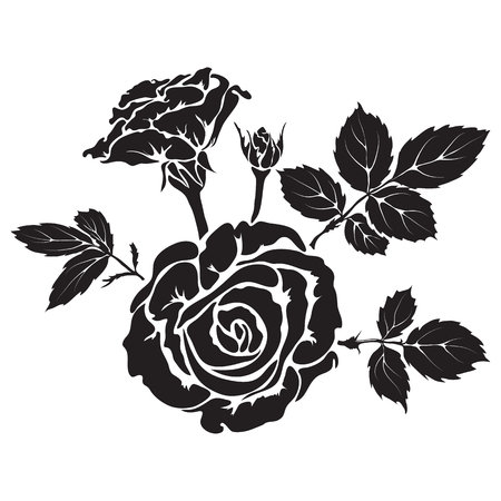 hand silhouette: Silhouette rose branch with opened flowers and buds, hand drawn vector Illustration