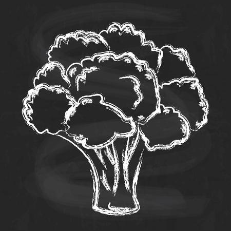 Atristische hand getrokken illustratie van broccoli, krijt puttend uit schoolbord imitatie