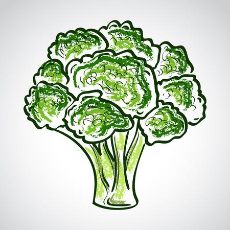 pastel drawing: Atristic hand drawn vector illustration of broccoli, pastel drawing imitation Illustration