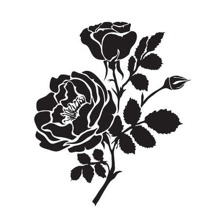 rosaceae: Silhouette rose branch with opened flowers and buds, hand drawn vector Illustration