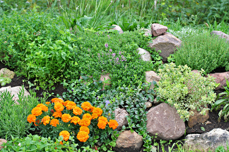 anthers: Rock garden with stones, tagetes, vinca, origano and thyme