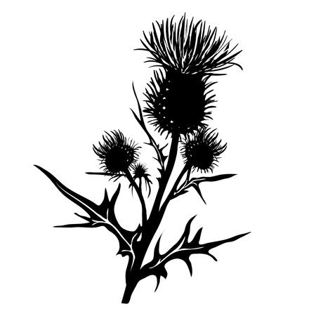Decoratieve vectordistel (Carduus acanthoides) op witte achtergrond, met de hand getekend silhouet Stock Illustratie