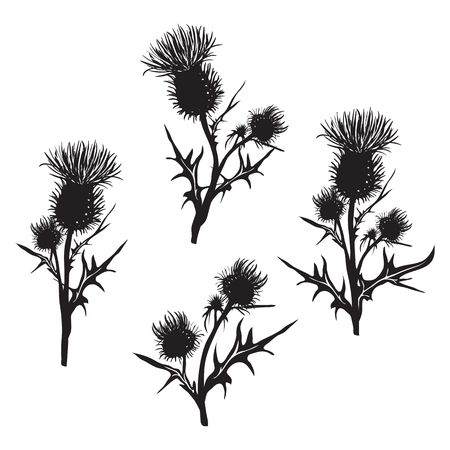 Decorative vector thistle (Carduus acanthoides) on white background, hand drawn silhouette