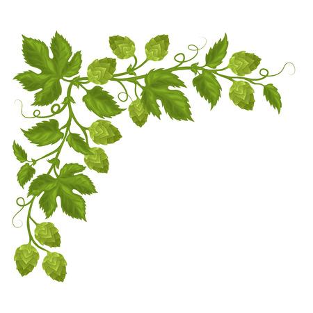 Szyszki chmielu i kwiaty z liśćmi, w pełni ręcznie rysowany wektor